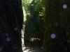 Piha Halfday canyon 23
